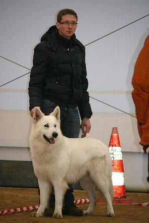 bekommt euer hund auch pedigree